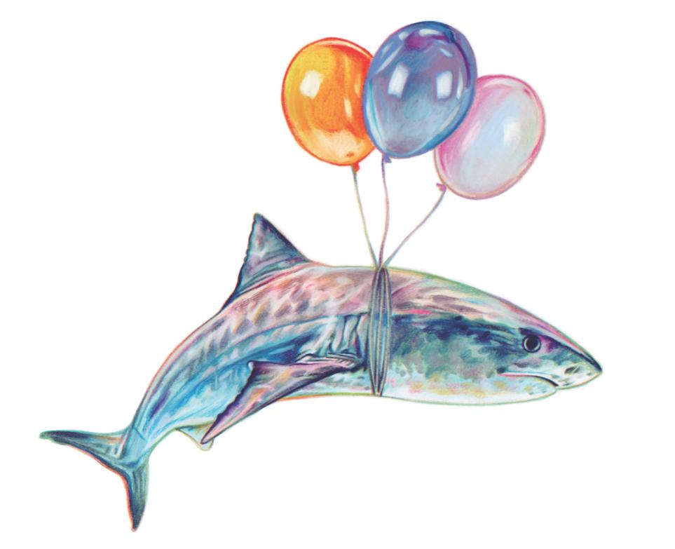Shark Zalko